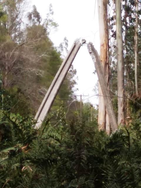 Viento puelche ha superado los 80 kilómetros por hora y mantiene a más de 15 mil personas sin suministro eléctrico en Pucón - Red Informativa Villarrica